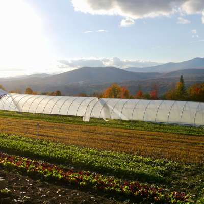 Putting the garden to bed: 3 steps to help your field rest well