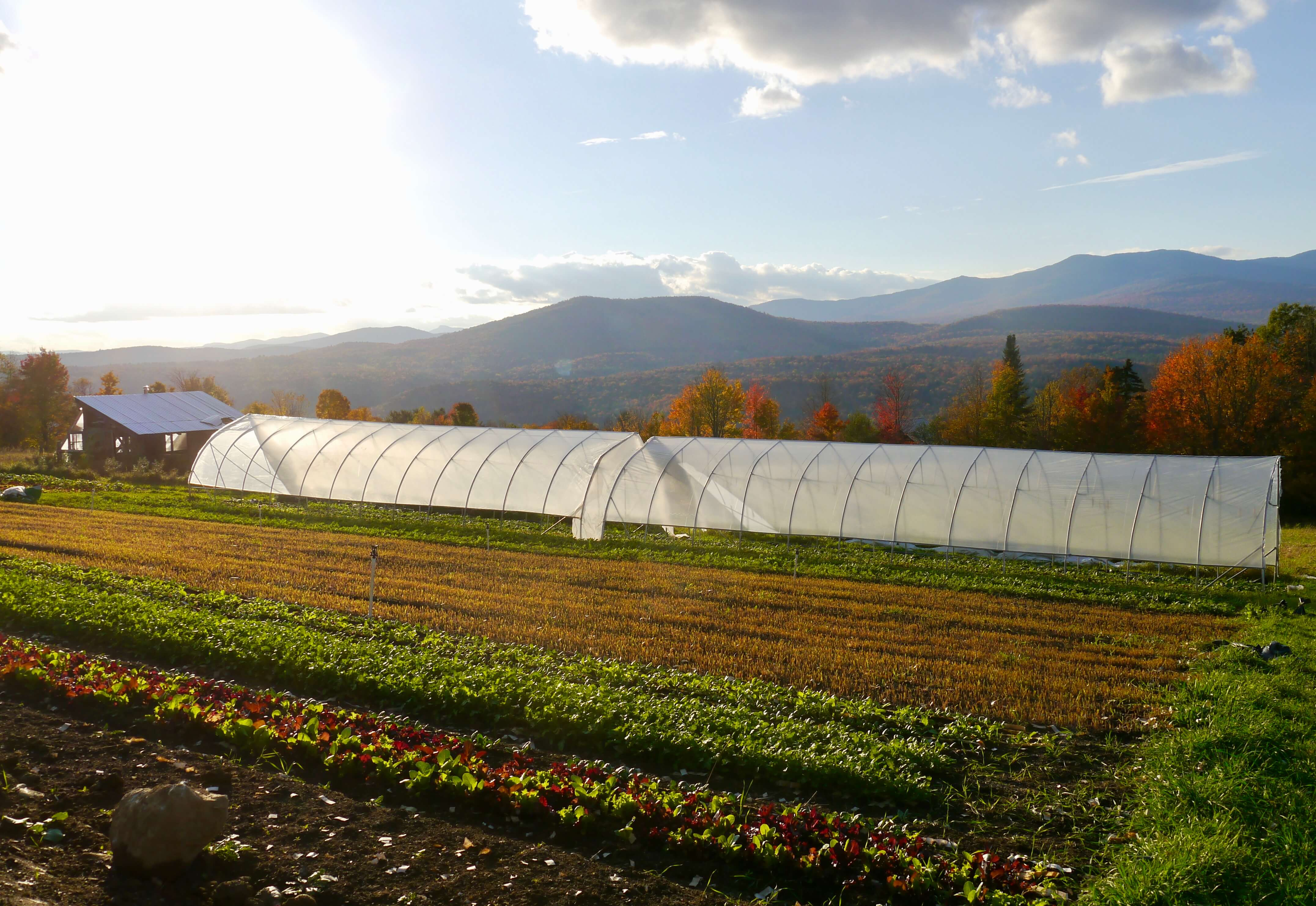 Planting cover crops is one way to put your garden to bed