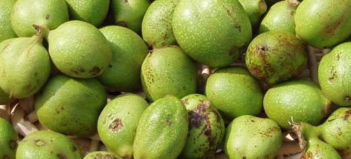 Green walnuts for walnut wine