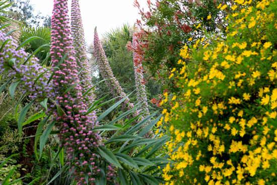 roscoff exotic gardens brittany
