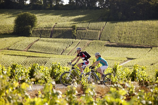 cycling through the champagne vineyards