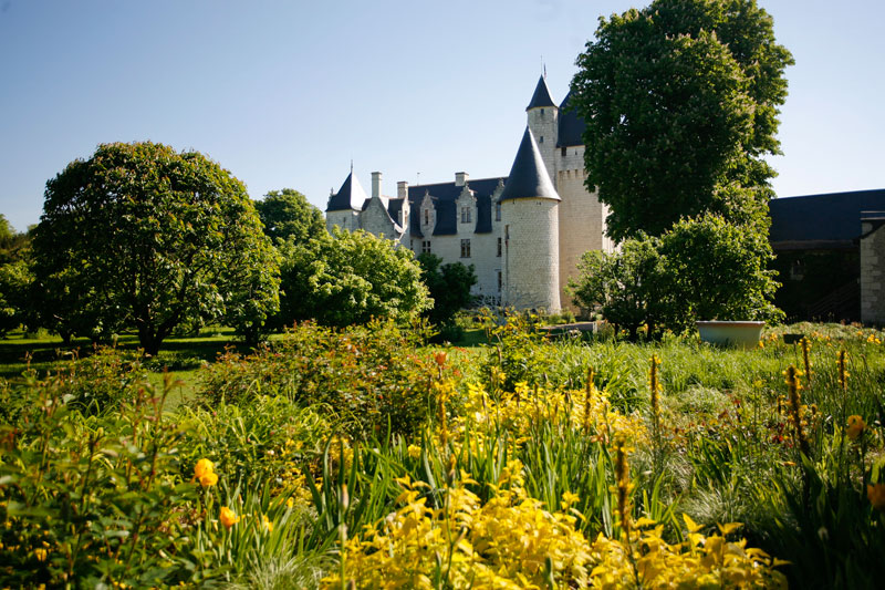 Fields of blooming daffodils around the Chateau du Rivau, Loire Valley
