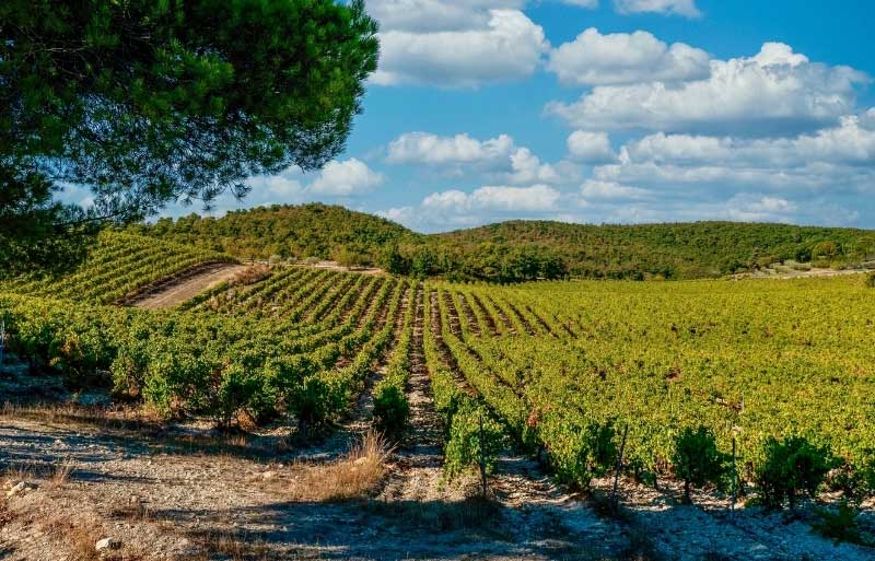 View over vineyards and scrubland around the village of Gigondas, Provence