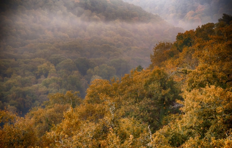 Mist drenches the forest of Broceliande in Brittany