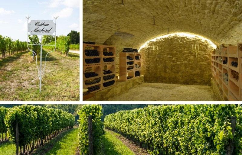 Vineyards of the Chateau Masburel