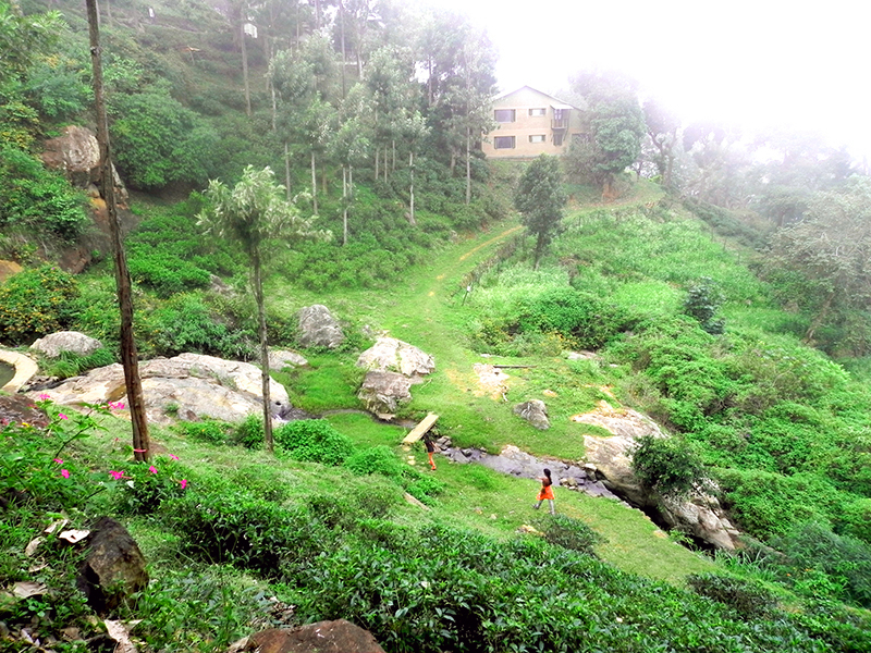 The view of Pepper House from Hornbill House - O'Land plantation Coonoor