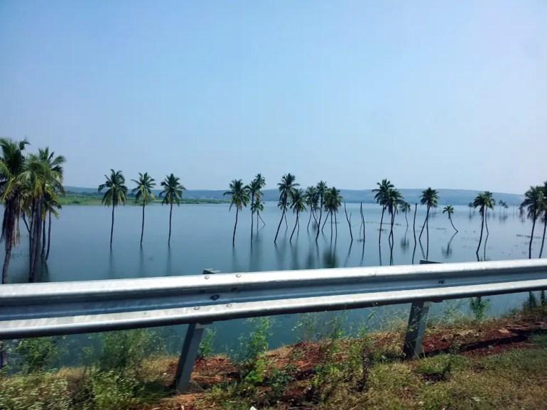 Bagalkot palm trees - An off-the-beaten-path Goan holiday