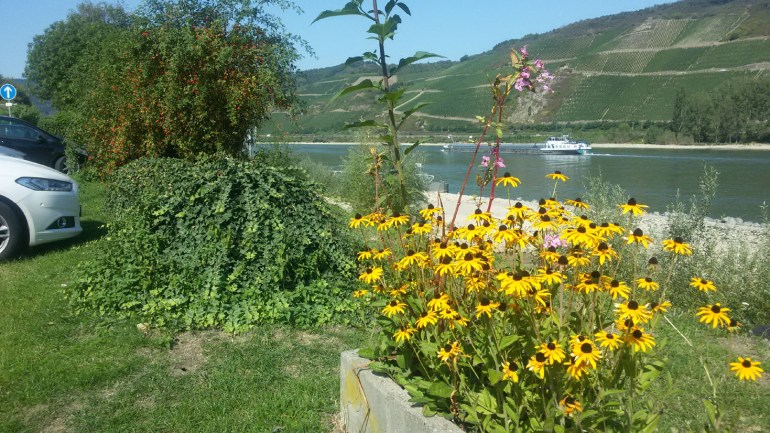 Low water level in the RhineA road trip through Germany, and other ways to pass the time (Part 3): the Rhine valley