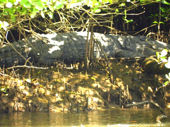 Sleeping crocodile - An off-the-beaten-path Goan holiday