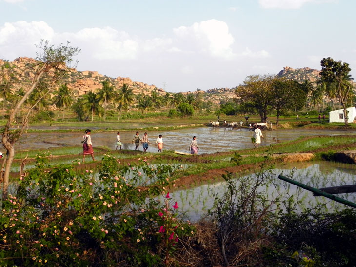 Hampi_GowriResorts_Farmers1 - Magical sights of Hampi
