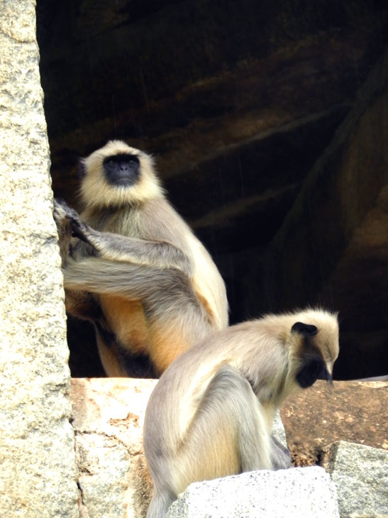 Hampi_OldBazaar_Langurs2 - Magical sights of Hampi