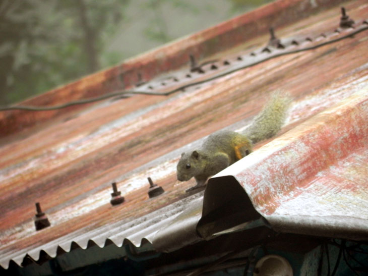 Kalimpong_GuestHouse_Squirrel