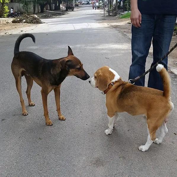 Dog body language - Confidence