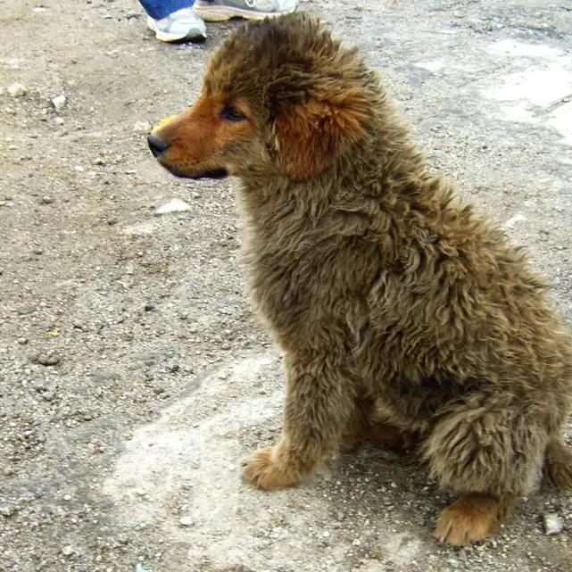 Leh - Chang La doggie - Eight things we learned in Ladakh