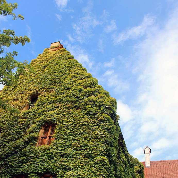 Augsburg - Fuggerei - Vine-covered house