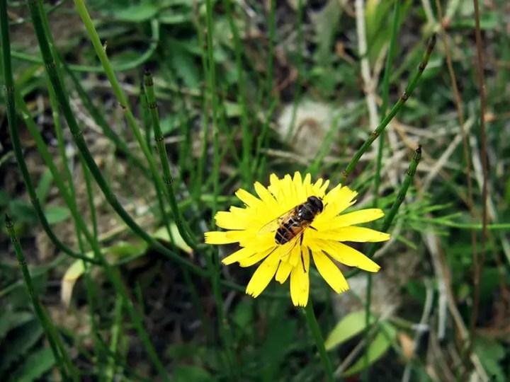 Bhutan - Bee on flower