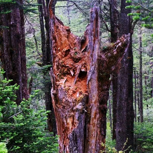 Bhutan - Chele La demon tree