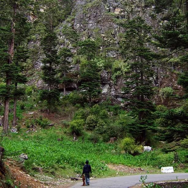Bhutan - Chele La stroll