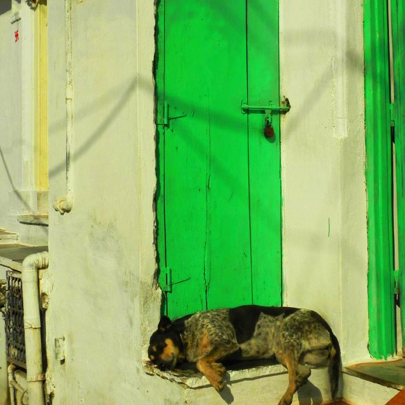 Udaipur - Doggie in the doorway