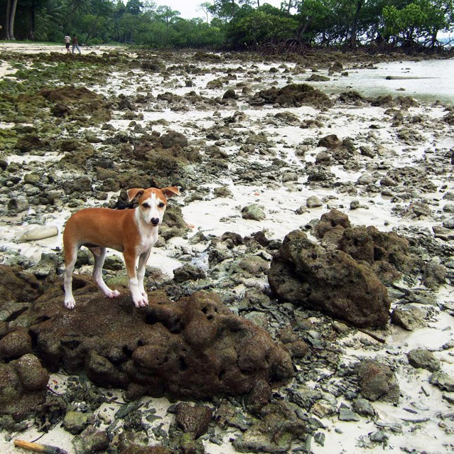Andamans-Havelock-Beach pup2