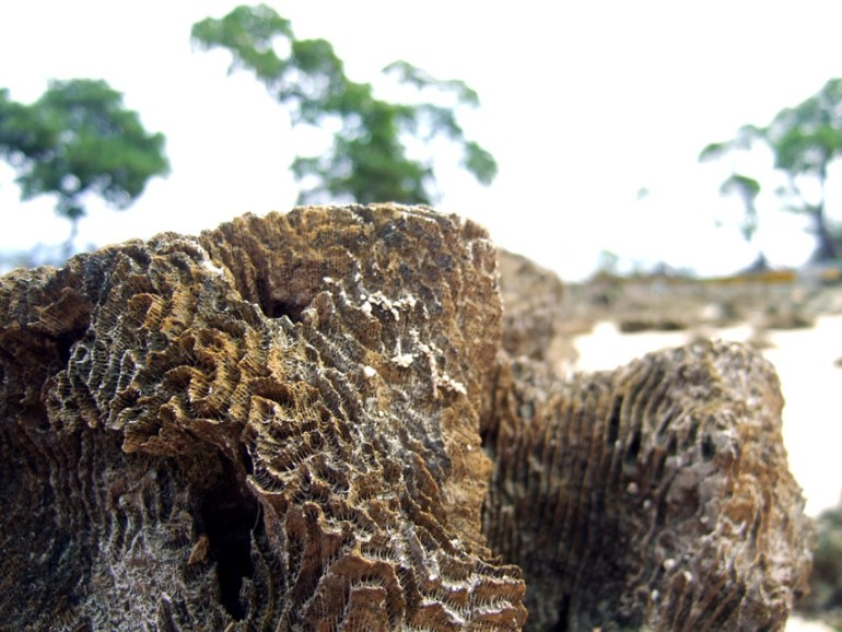 Andamans-Havelock-Eroded coral