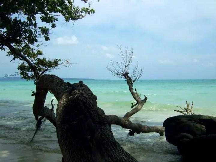 Andamans-Havelock-Kala Pathar-Fallen Tree