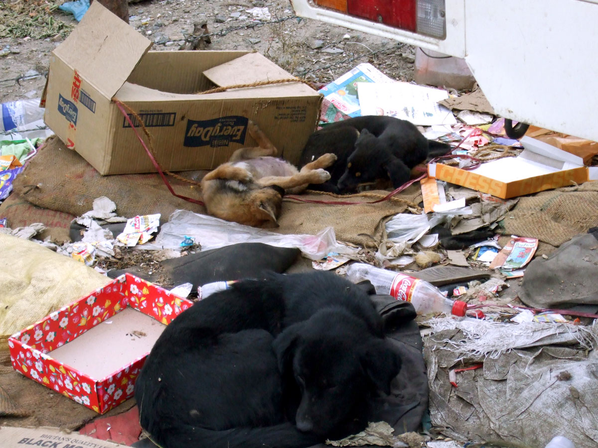 Doggies in rubbish, Thimphu, Bhutan- responsible traveller