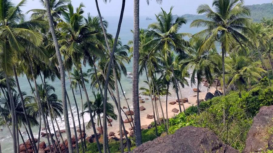 Agonda - Cabo de Rama palms