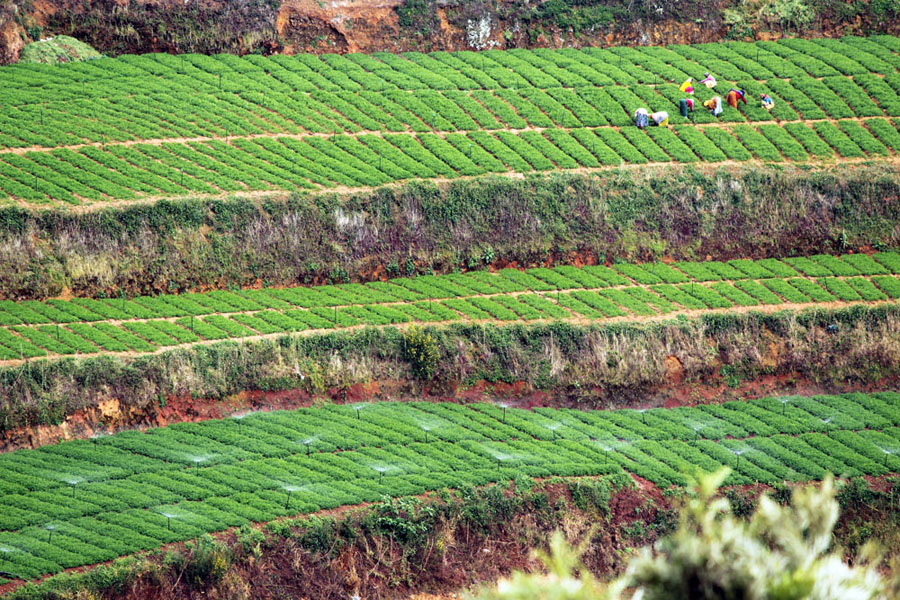 Coonoor - Plantation workers.jpg