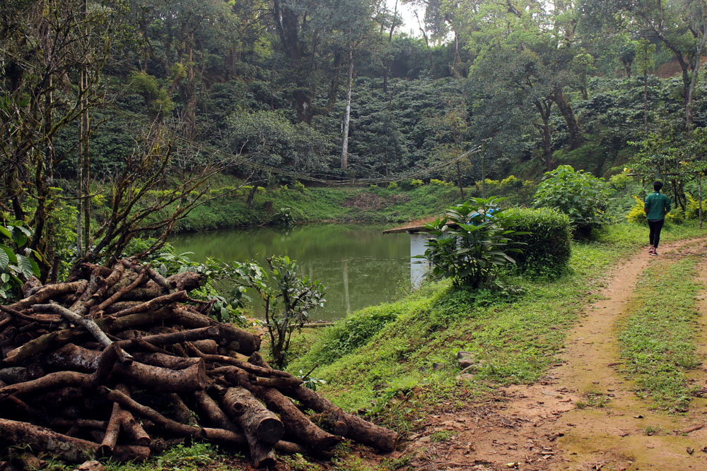 Coorg - Depot estate - Pond