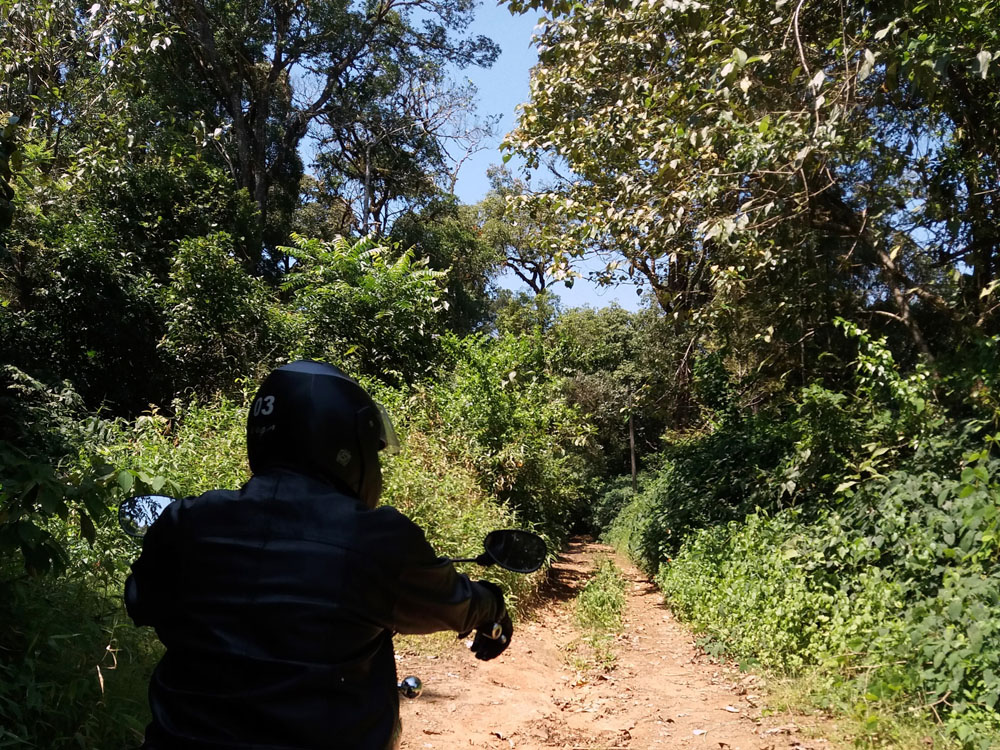 Forest road, Madikeri - Coorg travel guide