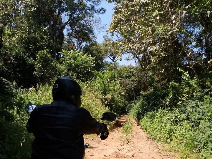 Forest road, Madikeri