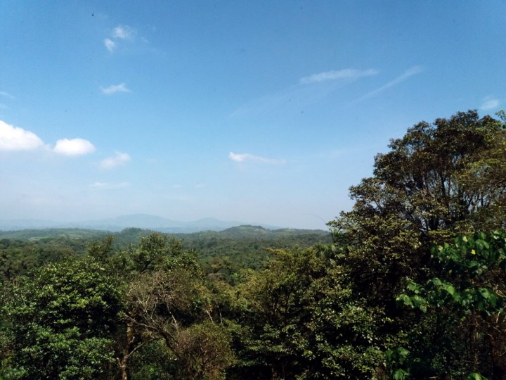 Forest view from the Taj resort