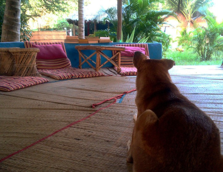 Agonda - eating and acco - sitout and doggie at Tutti - perfect base for a Goa trip