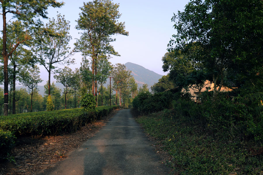 Tea plantation road at sunset in Valparai, Anamalai Hills, Tamil Nadu, India - travel mistakes we made