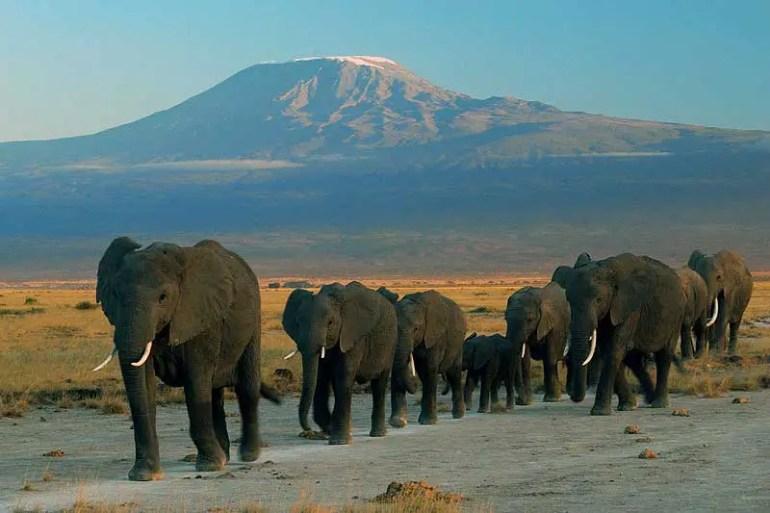 Elephants at amboseli - Planning your Kenya safari from India