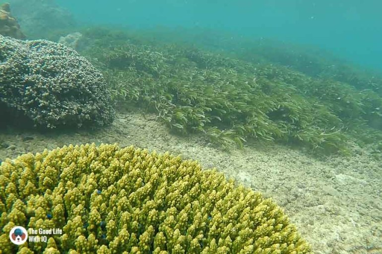 coral with blue fish - malindi marine national park