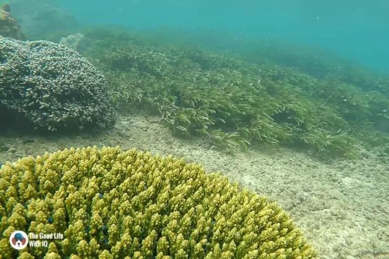 coral with blue fish - malindi marine national park