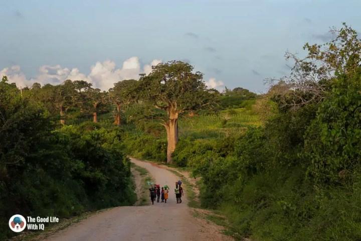 Children and trees at sunset near Malindi
