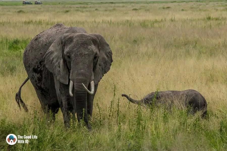 Kenya safari - Amboseli - Mother and baby elephant