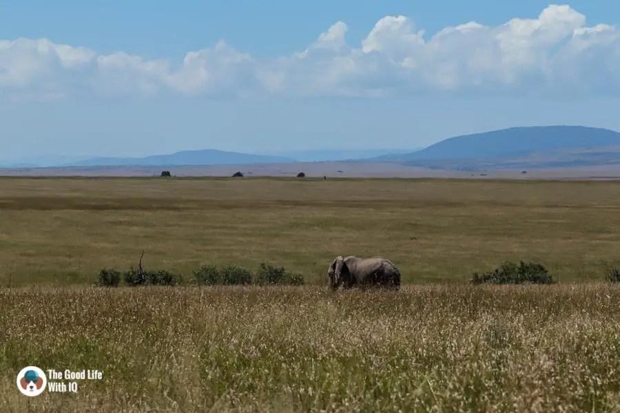 Kenya safari - Masai Mara - Lone elephant