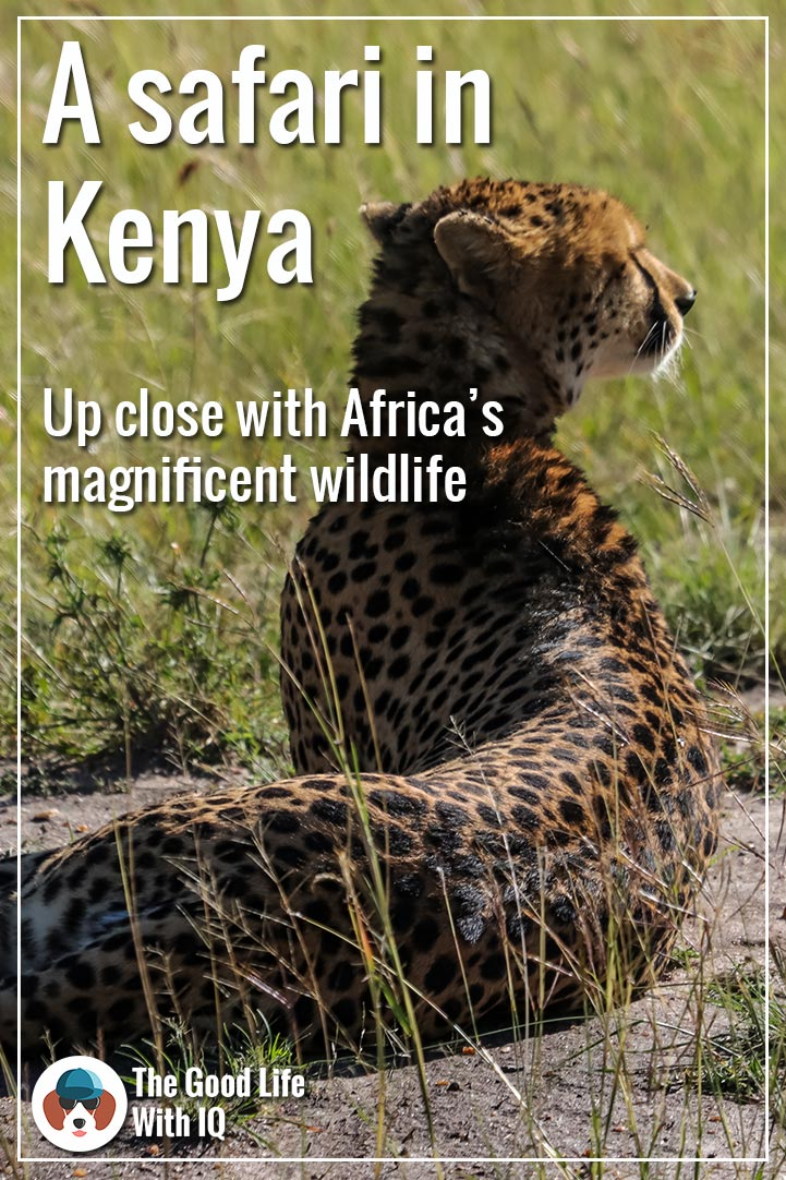 Pinterest thumbnail - Kenya safari