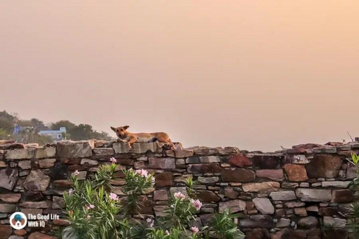 Chittorgarh Fort - Ratan Singh Palace doggie