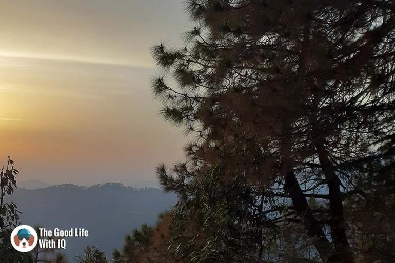 Pine needles at sunset - Samsung Galaxy A7 camera review