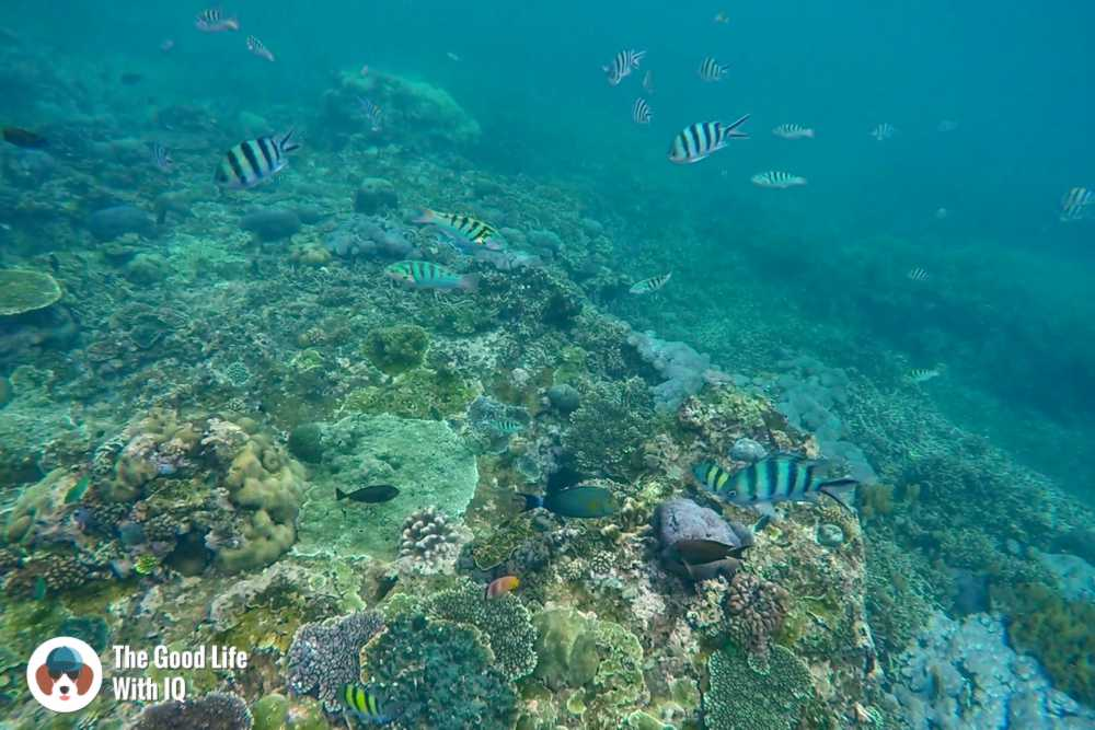 Snorkelling at Mangrove Point, Nusa Ceningan - Best places to stay in Bali