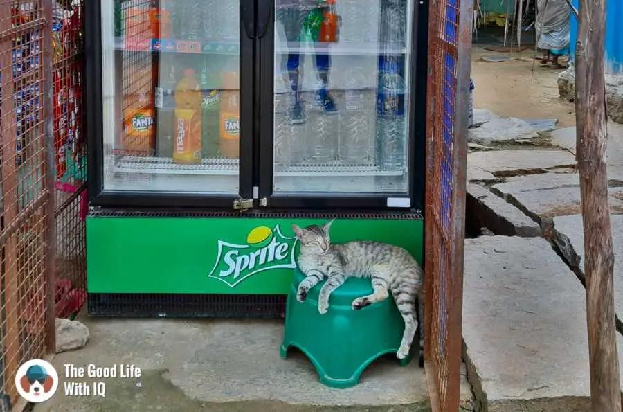 Cat - Lepakshi