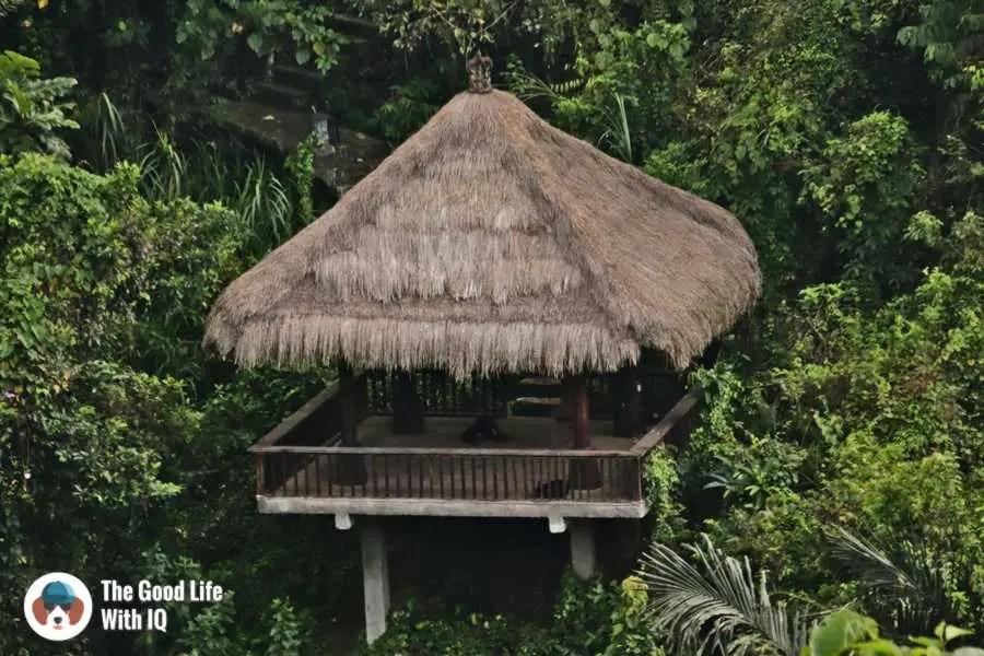 Doggie, Campuhan Trail - Three days in Ubud, Bali