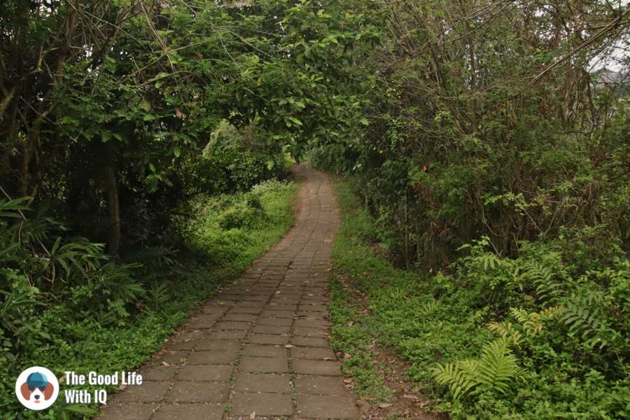Campuhan Trail - Ubud, Bali