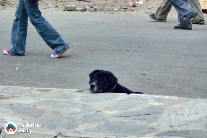 Doggie in Thimphu, Bhutan