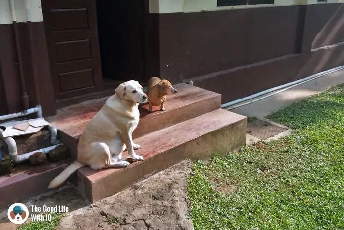Coorg - Cute doggies we've met on our travels
